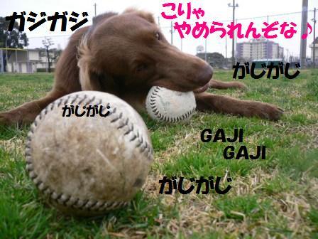 gajigajizona06.jpg