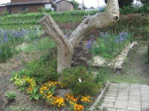 キキョウの里・流木