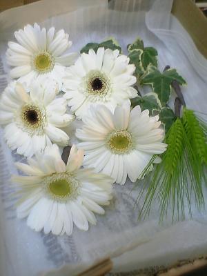 白ガーベラ髪飾り