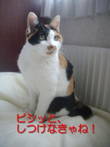 IMGP611988.jpg