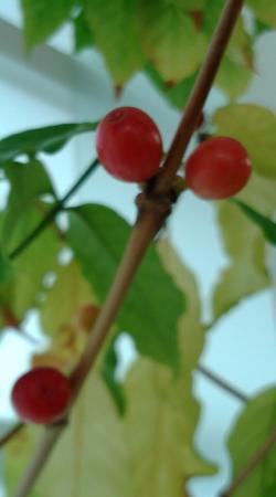 2010コーヒー豆