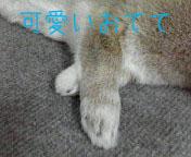 luna-foot01.jpg