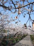 桜の名所 その1