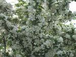 白い花が咲いてました