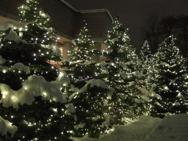 きれいなツリー