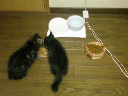 一緒に食べよう!