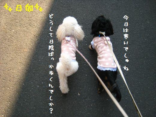 007_20090108214453.jpg