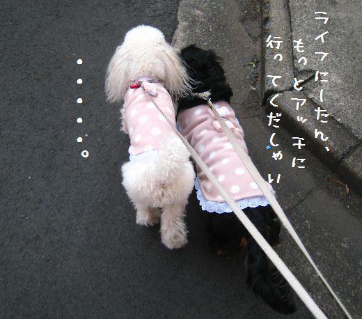 009_20090108214533.jpg