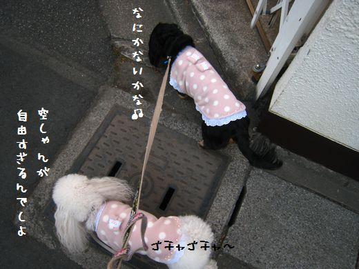 013_20090108214558.jpg