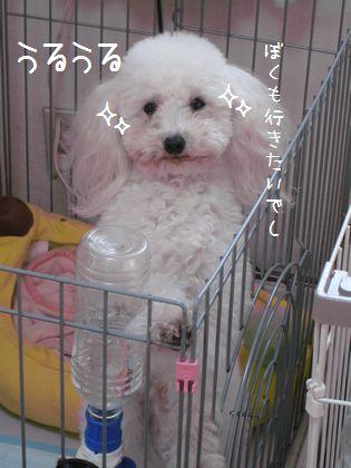 013_20090109112815.jpg