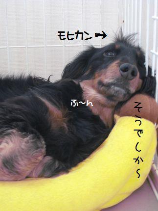 013_20090203220300.jpg