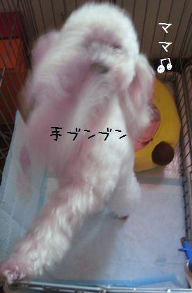 027_20090109193204.jpg
