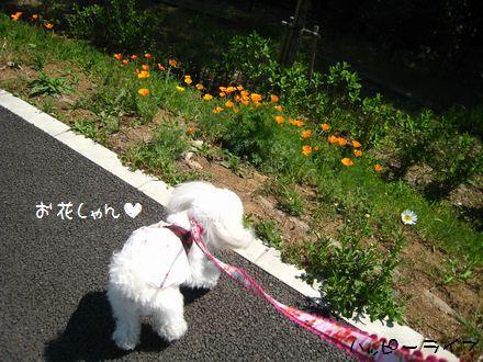 お花しゃん
