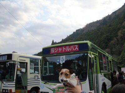 桜シャトルバス