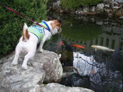 身延山の池2