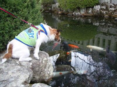 身延山の池3