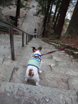 身延山、階段下り。