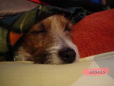 モモ、おやすみ