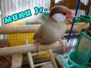 MUKU Jr.