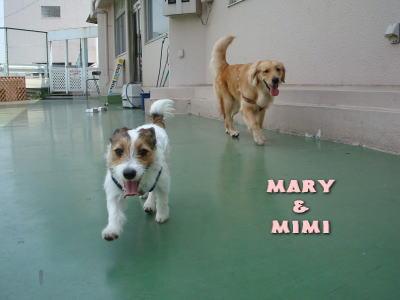 mary & mimi