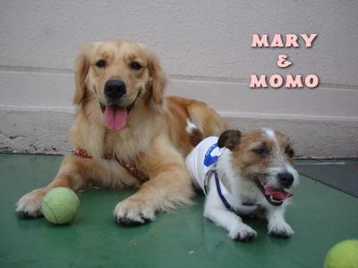 mary & momo