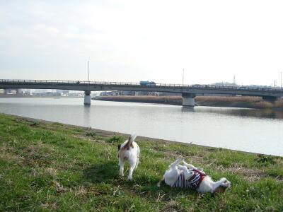 鶴見川で。