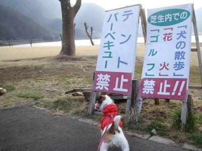 芝生内散歩禁止!!