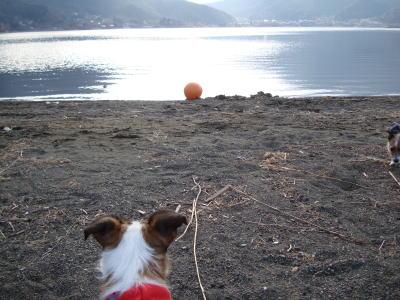 小海公園、ミミ。