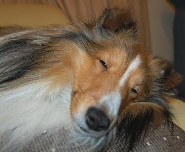 眠くなっちゃったよ