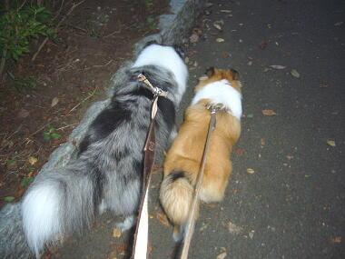 お散歩は楽しいね