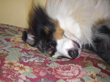 あ~、眠い