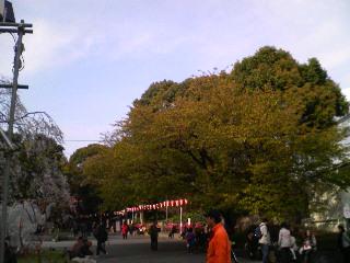 早くも葉桜