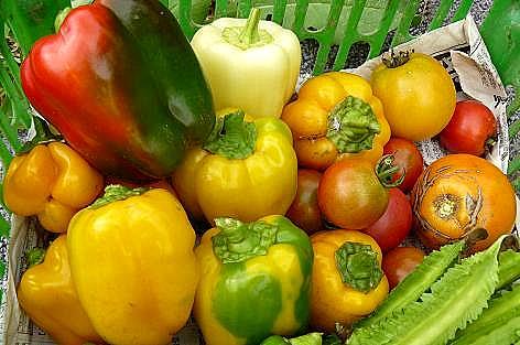 カラフルピーマンとトマト♪