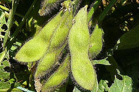 9月の中旬の豆♪