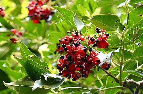 皿倉山で見た赤い実♪