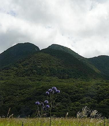 三股山とヒゴタイ♪