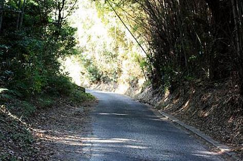 近所の山道♪