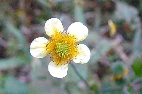 白と黄色の花♪