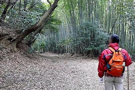 竹林を歩くと♪