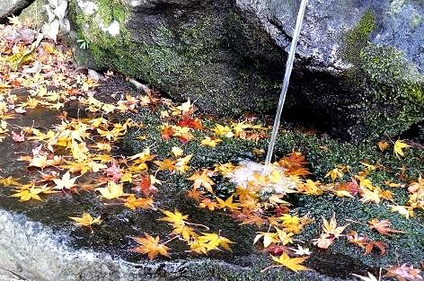 カエデの葉が浮いて♪