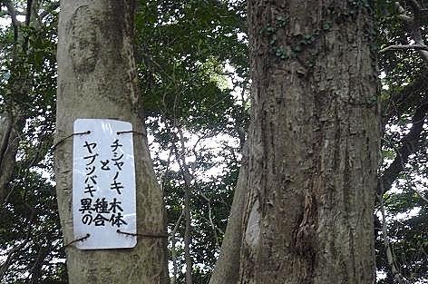 合体の木♪