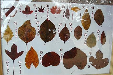 葉っぱの標本♪