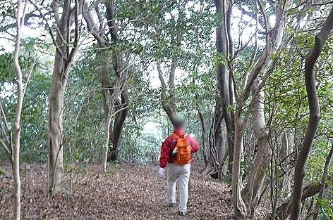 フカフカの雑木林♪