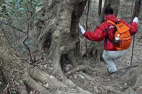 木の根に助けられて♪