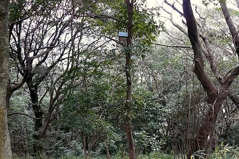 巣箱のある森♪