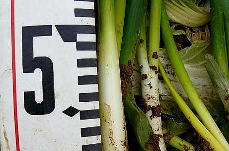 49cm?
