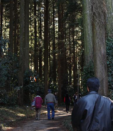 杉林を進み♪