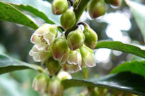 木々の小さな花♪