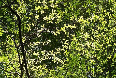 木々の新芽が光って♪