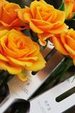 ベルと黄バラ